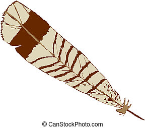 Vector illustration bird feather