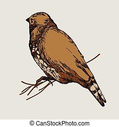 Vector illustration. Bird, hand-drawing.