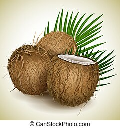 Coconut - Vector illustration - Coconut whis palm leawes
