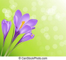 Vector illustration crocus flower background