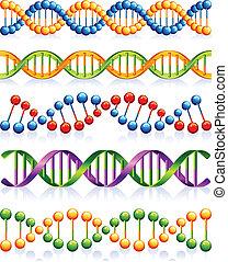 DNA - Vector illustration - DNA strands