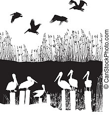 vector illustration Flock of pelicans na the old pier, vector EPS