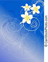 frangipani flowers - vector illustration- frangipani flowers...