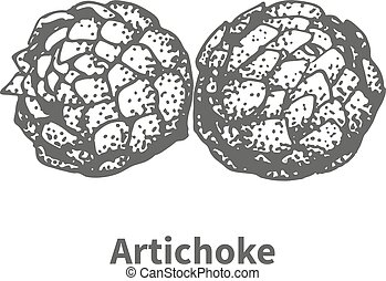Vector illustration hand-drawn artichoke