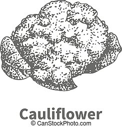 Vector illustration hand-drawn cauliflower