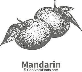 Vector illustration hand-drawn mandarin