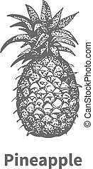Vector illustration hand-drawn pineapple