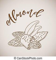 Vector illustration hand drawn sketch almond