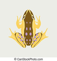 Vector illustration in flat style toad
