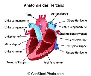 Vector illustration in german language with medical...
