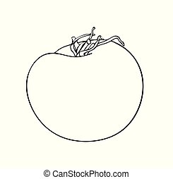 Vector illustration, isolated tomato fruit with a tail in black and white colors, outline hand painted drawing