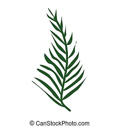 Leaves of a tropical plant isolated on white background