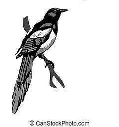 vector illustration magpie on white background