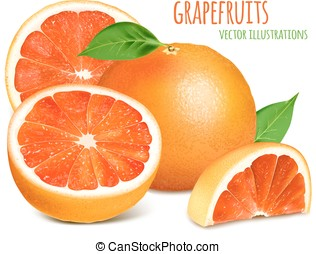 Vector illustration od grapefruits - Grapefruits with...