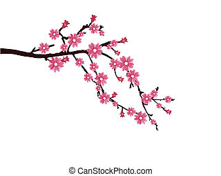 vector illustration of a branch with cherry blossom