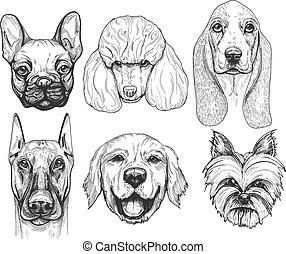 different dog breeds portraits