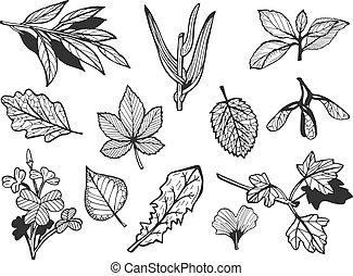 different leaves set