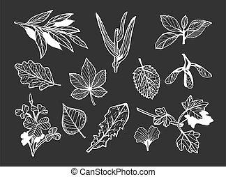 different leaves set on black background.