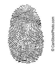fingerprint - vector illustration of a fingerprint