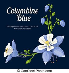 Vector illustration of a flower colombine blue