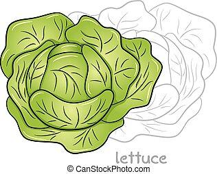Vector illustration of snails eating lettuce.