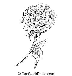 hand drawn rose black and beige vector illustration