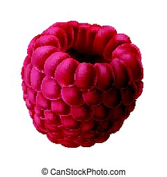 Vector illustration of a juicy raspberry isolated on white.