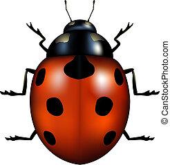ladybug - vector illustration of a ladybug isolated on white