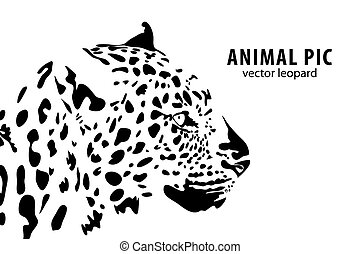 leopard - Vector illustration of a leopard on white ...