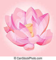 vector illustration of a Lotus