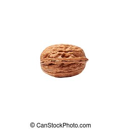 Vector illustration of a realistic Walnut  isolated on white (mesh).