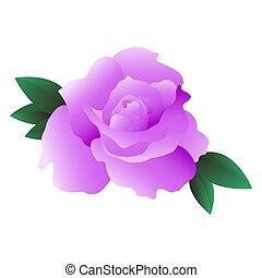 Vector illustration of a rose flower