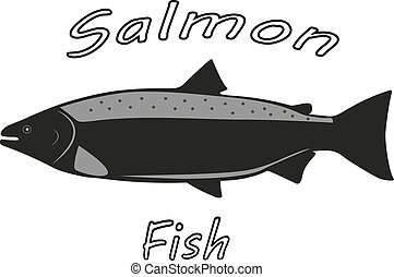 Vector illustration of a salmon fish
