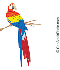 vector illustration of a scarlet macaw sitting on a branch on white background