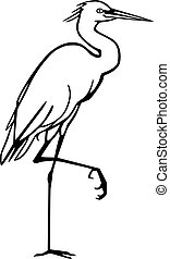 Vector illustration of a wading bird, the Snowy Egret, standing with one foot lifted up.