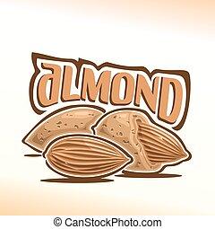 Vector illustration of almond