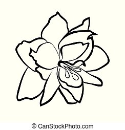 Vector illustration of Amaryllis flower