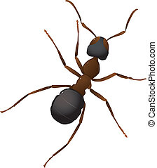 Vector illustration of an ant
