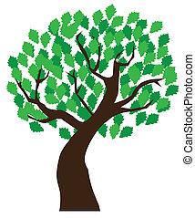 oak - vector illustration of an oak