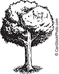Pen and ink black and white vector illustration of an oak tree.