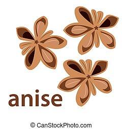 anise star - vector illustration of anise star