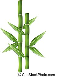 bamboo brunches - vector illustration of bamboo brunches