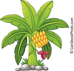 Vector illustration of Banana tree on a white background