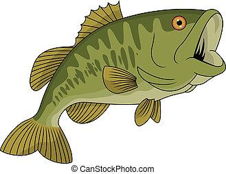Bass fish - Vector Illustration Of Bass fish