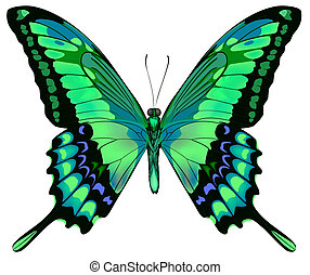 Vector illustration of beautiful blue green butterfly  isolated on white background