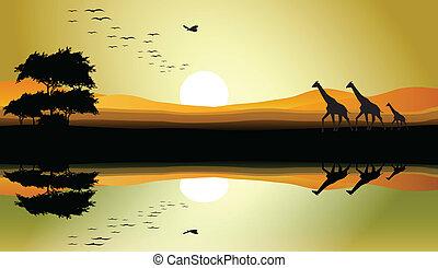 beauty safari of giraffe silhouette