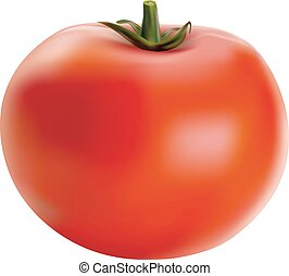 Vector illustration of big ripe red fresh tomato