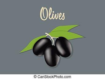 vector illustration of black olives