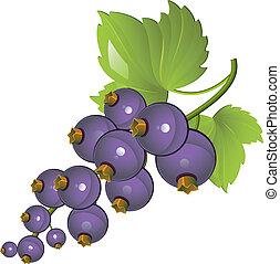 Blackcurrant - Vector illustration of Blackcurrant over...