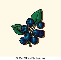 Vector illustration of blueberries